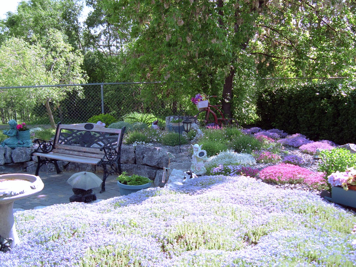 1000 images about minimal maintenance on pinterest for Creative design landscaping